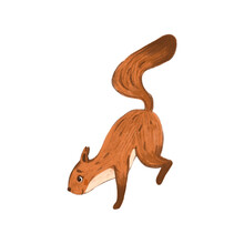 Illustration With Cute Little Squirrel On White Background