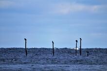 Cormorants Sitting On Fishing Pool. Blue Background. Sea View..