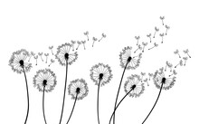Dandelion Wind Blow Background. Black Silhouette With Flying Dandelion Buds On A White. Abstract Flying Seeds. Floral Scene Design
