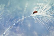 Ladybug On The Mushrooms