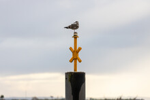 Young Seagull On A Pole