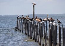 Beautiful Shore Bird Scene