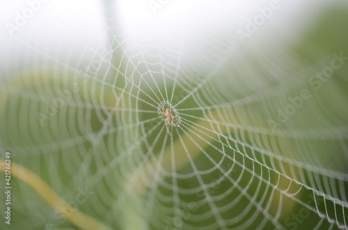 Close-up Of Spider On Web Wallpaper Mural