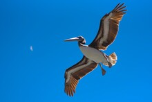 Seabirds Flying