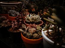 Thp Succulents