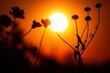 Leinwandbild Motiv Dry Flowers At Sunset