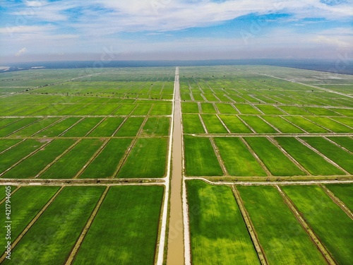 Fototapeta Aerial View Of Green Paddy Field