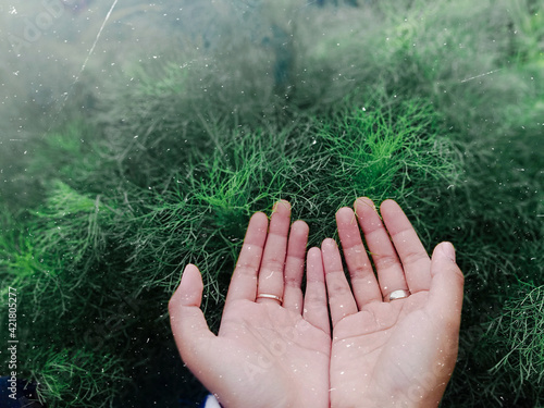 Fototapeta Close-up Of Person Hand On Grass obraz
