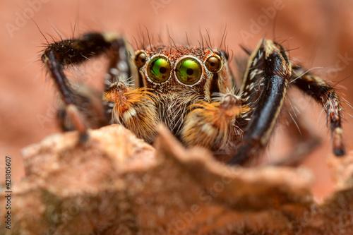 Foto Close-up Of Spider