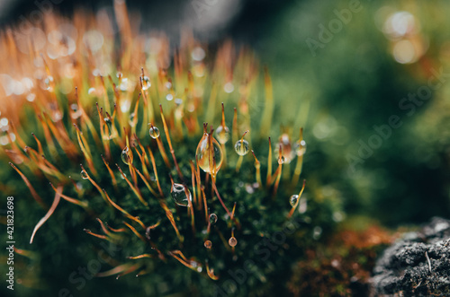 Tela Raindrops On Moss