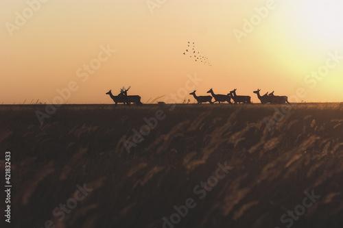 Fototapeta Silhouette Birds On Field Against Sky During Sunset obraz