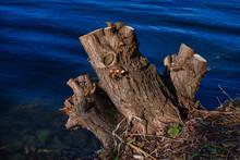 Baumstumpf Am Wasser
