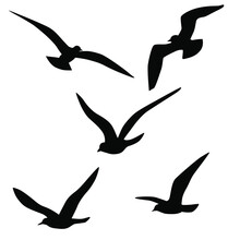 Set Of Vector Silhouettes Of Seagull In Flight, Black Color, Isolated On White Background