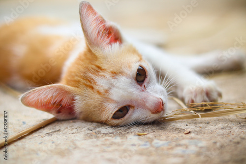 Fotografie, Tablou Close-up Of Cat Eating