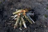 Fototapeta Zwierzęta - niewypalone ognisko