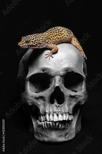Fotografija skull and gecko on black