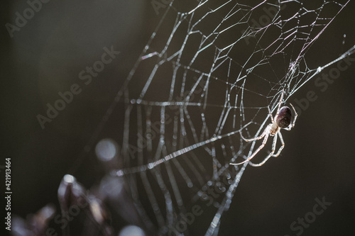 Canvas Print Close-up Of Spider Web