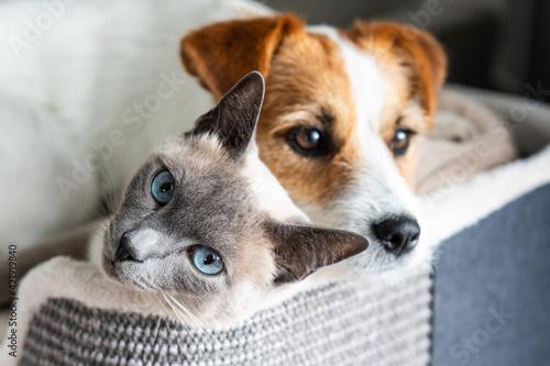 Best Friends Fototapet