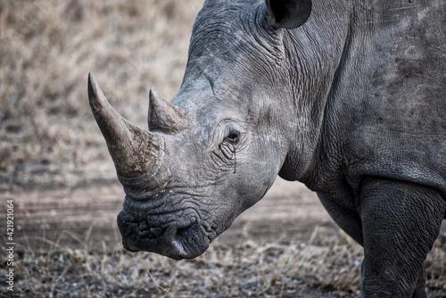 Fototapeta Close-up Of A Rhino On Field