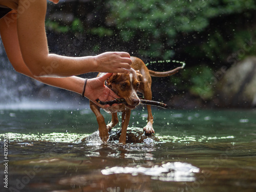 Pet dog playing fetch with its owner at a river Fototapet