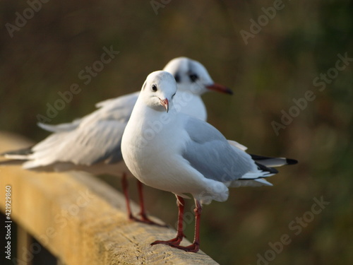 Fotografiet Close-up Of Seagull Perching On Wooden Post