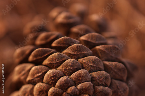 Tela Natural Brown Background. Pine Tree Details.
