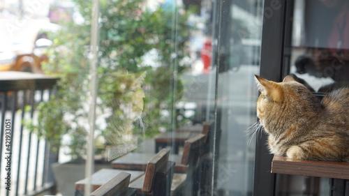 Vászonkép Cat Looking Through Window