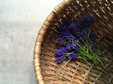 High Angle View Of Purple Flowering Plants In Basket