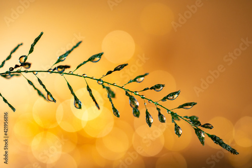 Canvas Print Close Up Of Golden Dew Drops Against Bokeh Background