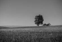View Of A Landscape With A Lone Tree