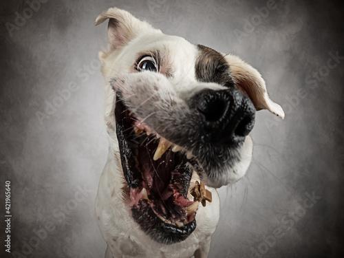 Fotografija Close-up Of A Dog Catching A Treat