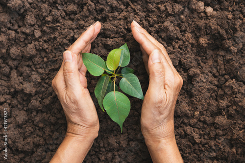 Canvas Print Hand of person protection growing young plant on fertile soil for agriculture or save earth,nature concept