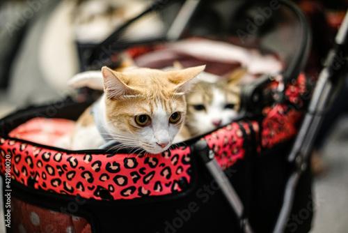 Close-up Portrait Of A Cat Fototapet