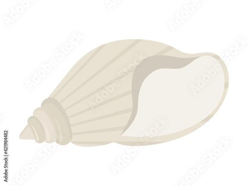 Fotografie, Obraz white seashell isolated