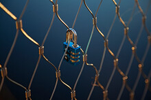 A Blue Padlock That Symbolizes Love Mounted On A Bridge