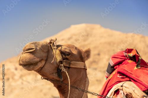 Obraz na plátne Camel Outside