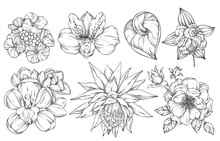 Collection Of Flowers, Vector Illustration. Black And White