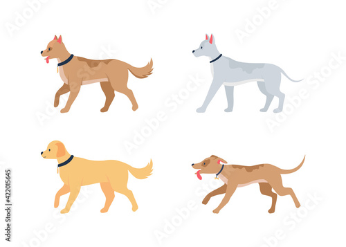 Fototapeta Various dog breeds flat color vector detailed character set. Domestic animals. Walking pups in collars. Pet care isolated cartoon illustration for web graphic design and animation collection obraz