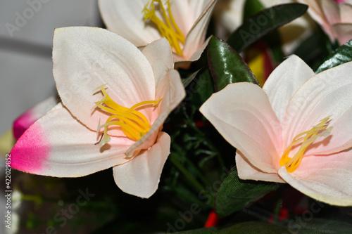 Fototapeta kwiaty róże obraz
