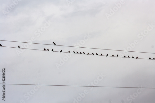 Low Angle View Of Birds Perching On Cable Against Sky Fototapet