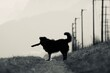 canvas print picture - Dog Standing On Land