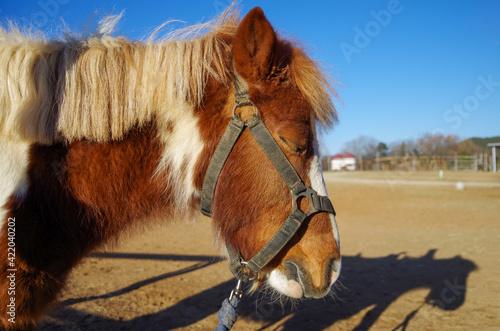 Fototapeta Close-up Of A Horse