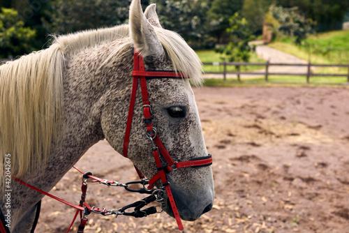 Fotografia, Obraz Close-up Of A Horse In The Field