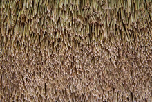 Brown Dry Grass Lines Pattern For Nature Leaves Grass Roof Or Wall, Background And Texture .