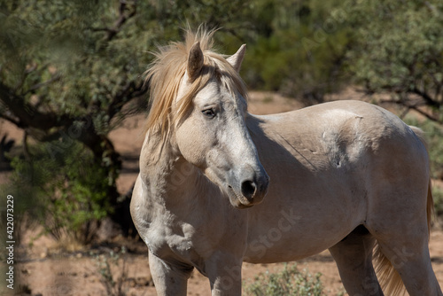 Fototapety, obrazy: Close-up Of A Horse In Field