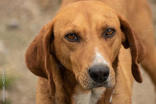 Obraz na plátne Close-up Portrait Of Dog