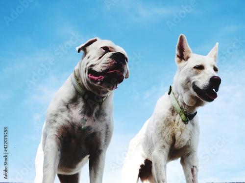 Fototapeta View Of Dogs Against Sky