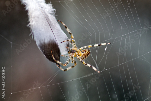 Canvas Close-up Of Spider On Web