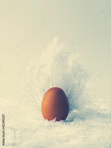 Fototapeta Egg On Feathers obraz