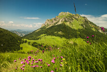 View Of Velky Rozsutec In Mala Fatra Mountains With Blooming Pink Flowers
